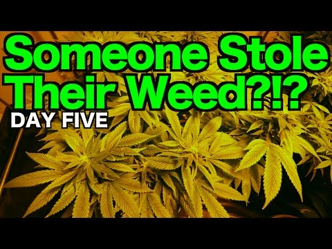 Weed Shop and Grow Room | THE AMSTERDAM VLOG #5