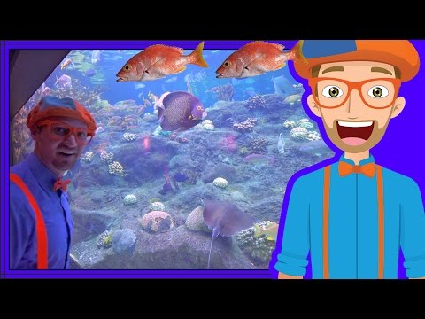 Animals For Children With Blippi | The Sting Ray And Fish!