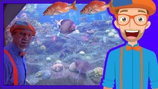 Animals for Children with Blippi | The Sting Ray and Fish! thumbnail