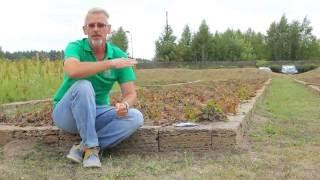 Сеем огород в августе - сентябре.