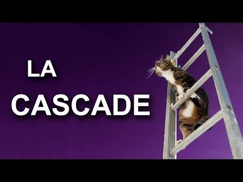 LA CASCADE - PAROLE DE CHAT