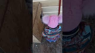 Фонд Умка: собака Чика не торопится выходить из будки
