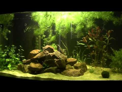 720L Südamerika Aquarium / 190 Gallons South America [HD]