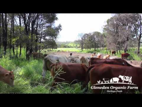 Welcome to Gleneden Organic Farm