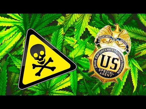 DEA Greenlights Dangerous Marijuana