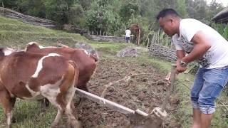 Nepali Traditional Farming