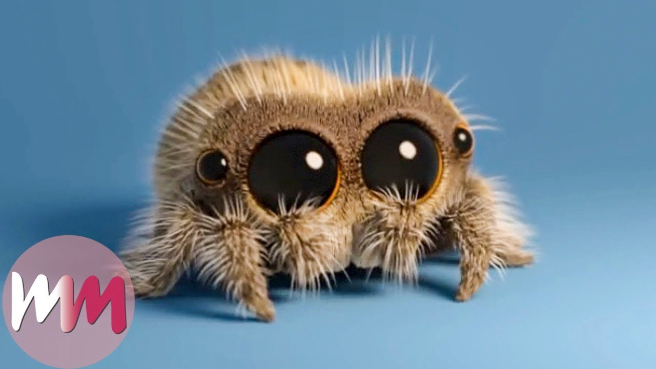 Download Lucas the Spider - Top 3 Facts!