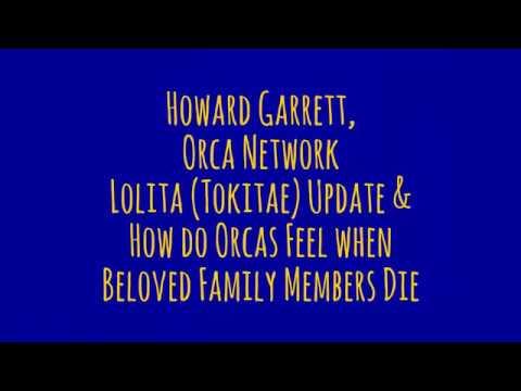 Update on Lolita (Tokitae) & How do Orcas Feel when Beloved Family Members Die?