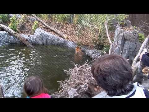 Banyan Wilds at Woodland Park Zoo