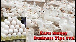 बत्तख पालन कैसे करे - Duck Farming    Business Tips    By Shailesh&NHTV - Stafaband