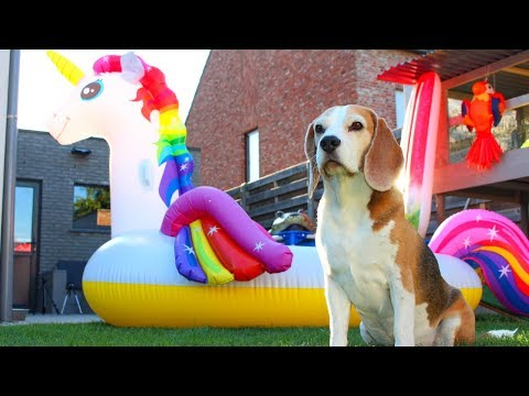 Dog Gets GIANT UNICORN Surprise : Louie The Beagle