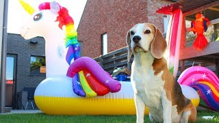 🌟💦MEGA UNICORN💦🌟 Surprise Pool Party | Funny Dogs Louie & Marie