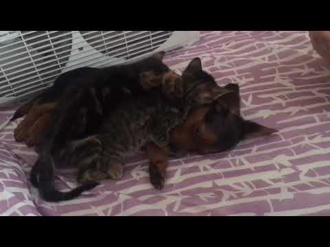 kittens welcome puppy home