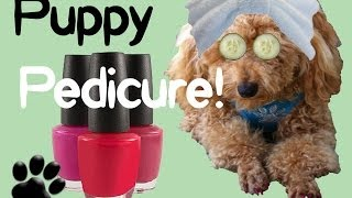 Puppy Pedicure! Clip File Polish Pups Nails - Diy Dog Grooming By Cooking For Dogs