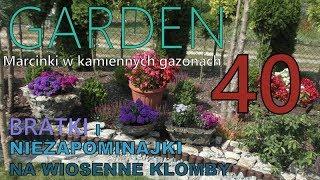 GARDEN (40) - Tulipany czas sadzić - Marcinki, Astry bylinowe - Niezapominajki na wiosenne klomby