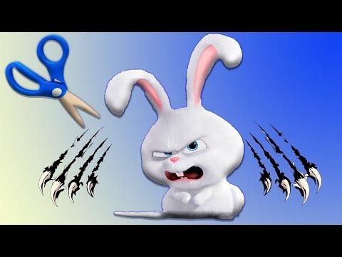 Как постричь кролику когти, нужно ли стричь когти кролику?