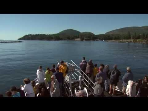 Conservationists and Tourists Go On a Whale Watching Adventure in Bar Harbor, Maine