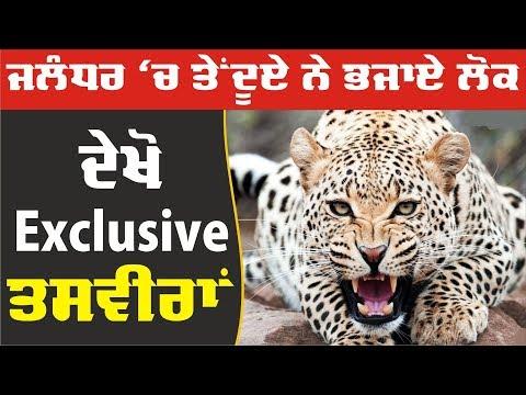 Exclusive: Jalandhar 'ਚ leopard ਨੇ ਲੋਕਾਂ ਨੂੰ ਪਾਈਆਂ ਭਾਜੜਾਂ