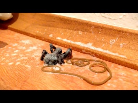 Bug Spray Kills Spider, Spawns Nightmare
