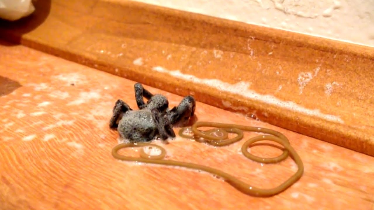 Image result for VIDEO: She Killed This Spider With A Spray. But What Happens Just Moments Later? UTTER NIGHTMARE