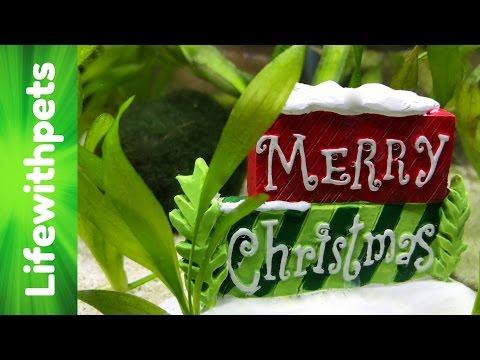 Divided Betta Fish Tank Christmas Theme