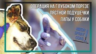 Операция на глубоком порезе пястной подушечки лапы у собаки при помощи плазмы NIKOR SPRAY COAG
