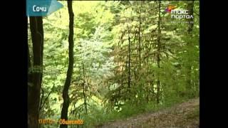 Реликтовый самшитовый лес Сочи утерян на 50