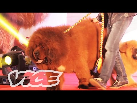 The Most Expensive Dog in the World: VICE INTL (China)