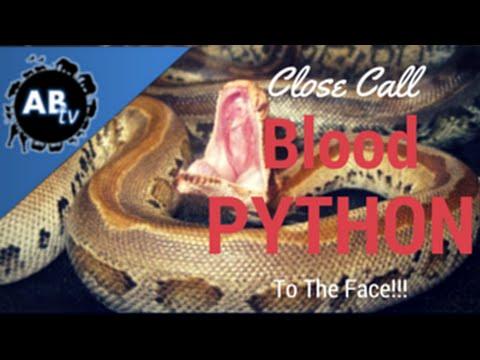 Close Call Blood Python Bite to the Face!  SnakeBytesTV : AnimalBytesTV
