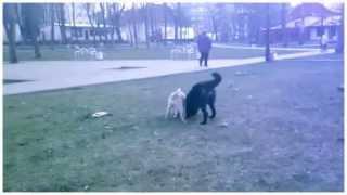 Борьба собак за кость!