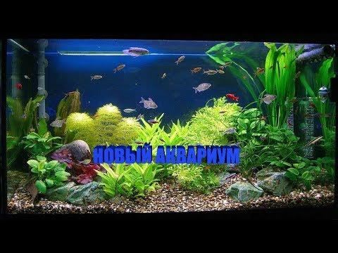 Аквариум для черепахи | Обустройство аквариума для красноухой черепахи | Мой подарок на ДР