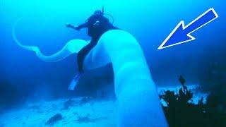 Загадочные Глубоководные Существа Снятые на Камеру