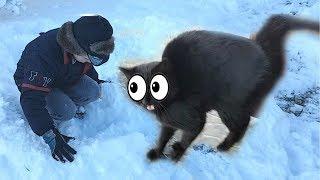 ТАЙНА ЧЕРНОЙ КОШКИ РАСКРЫТА! Строим дом из снега для кота