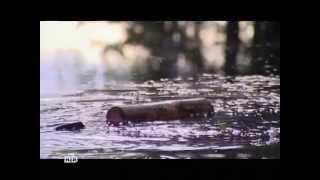 Фильм 6.«Чудовище по-соседству?»[19.02.2011]