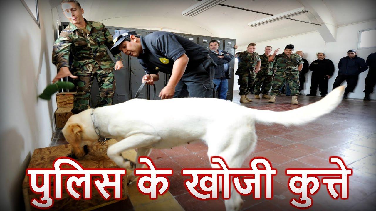 कैसे काम करते हैं पुलिस के खोजी कुत्ते - How the work of the police sniffer  dogs in hindi