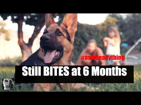 My Dog Still BITES at 6 Months - Dog Training Advice Video - ask me anything