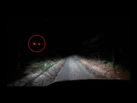 Thumbnail: (CLINTON ROAD) We went further down the trail on clinton road... Something attacked us...