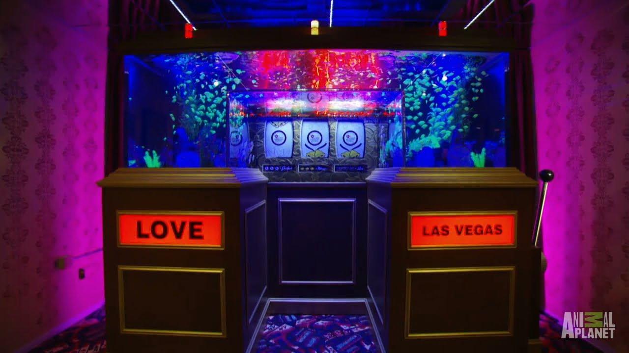 Reveal Vegas Weddings Tank