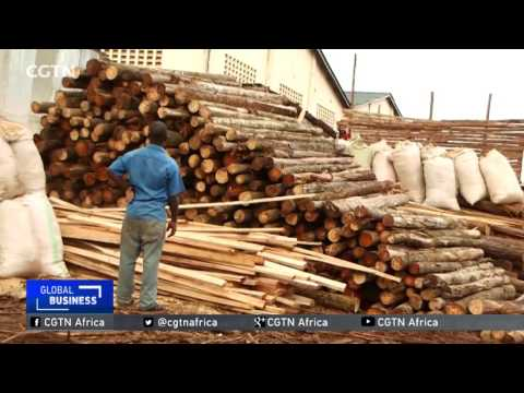 Ugandan farmers growing trees to meet construction demands