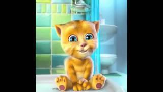 gato amarillo no me quiero bañar