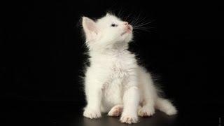 Игра Кошки Мышки. Реальное Видео - 4