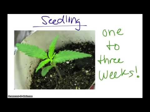 A Beginners Guide To Growing Marijuana Indoors