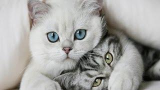 Смешное видео с кошками. Котики