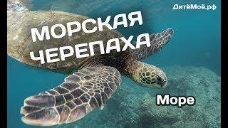 Морская черепаха. Энциклопедия для детей про животных. Море