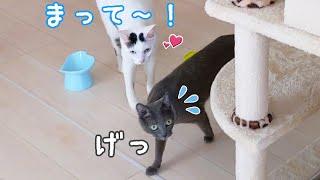 チロさんはハムちゃんが大好きすぎて毎日こんな感じです…!