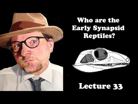 Lecture 33 Who Are The Early Synapsid Reptiles?