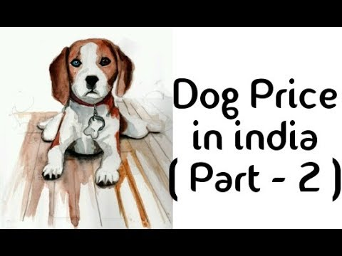 Dog price in india ( Part - 2 ) medium dog breed price in india