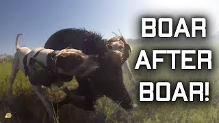 Boar after Boar! WHAT A RUN! Pig hunting Australia