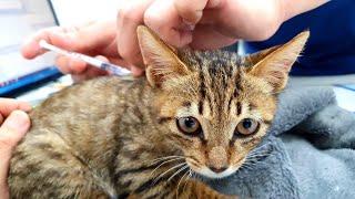 아기 고양이 웨이 첫 예방접종 다녀온 날, 그리고 새로…