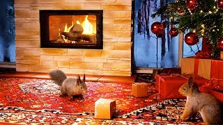 Christmas With Squirrels & Relaxing Christmas Music ( 1 Hour )